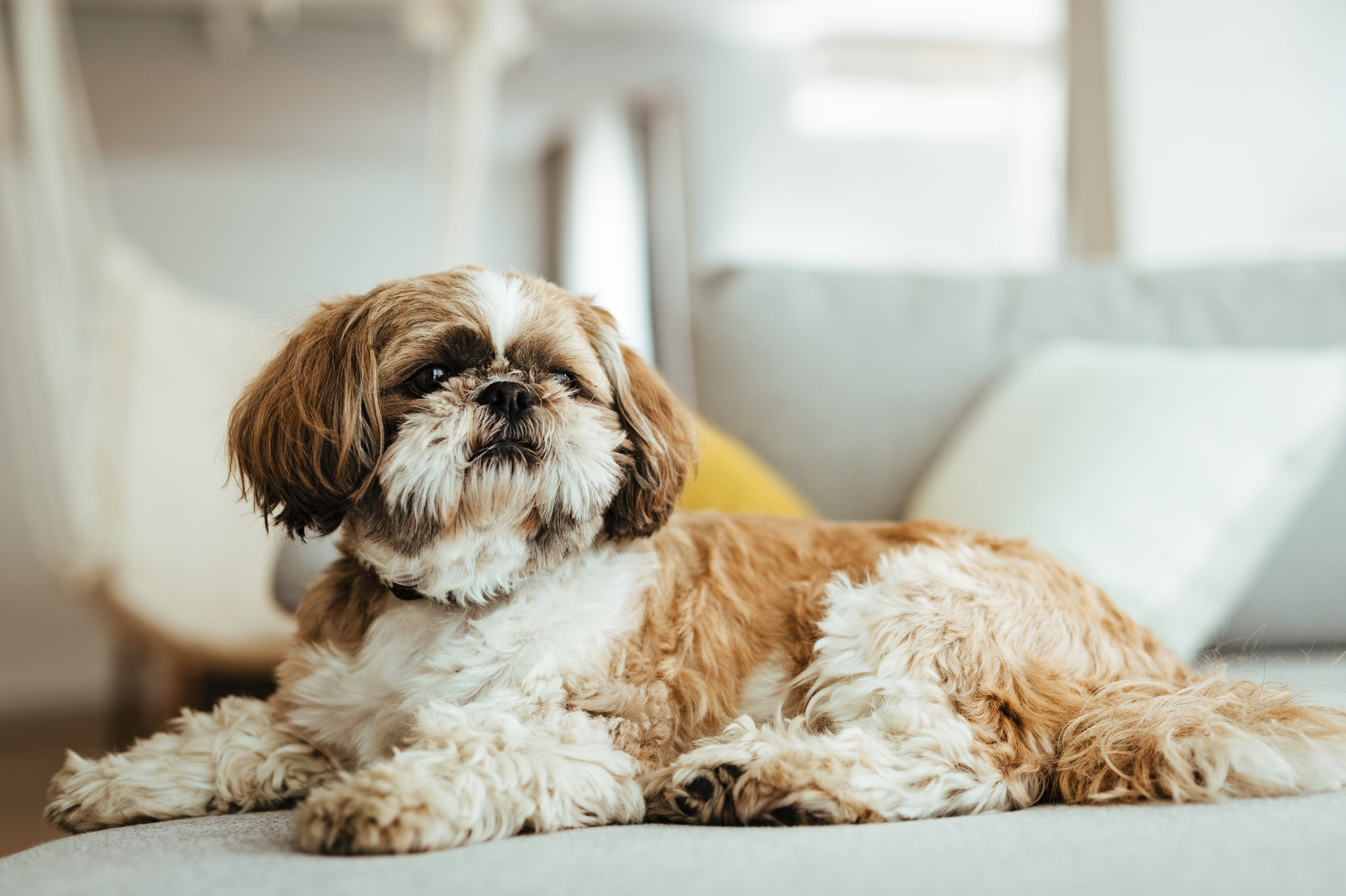 Learn The Reality Regarding The Cost Of Commercial Dog Food Tips For Evaluating Commercial Dog Food Prices
