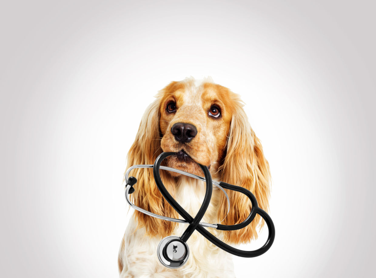 Choose the easiest method to Improve Your Pet Health