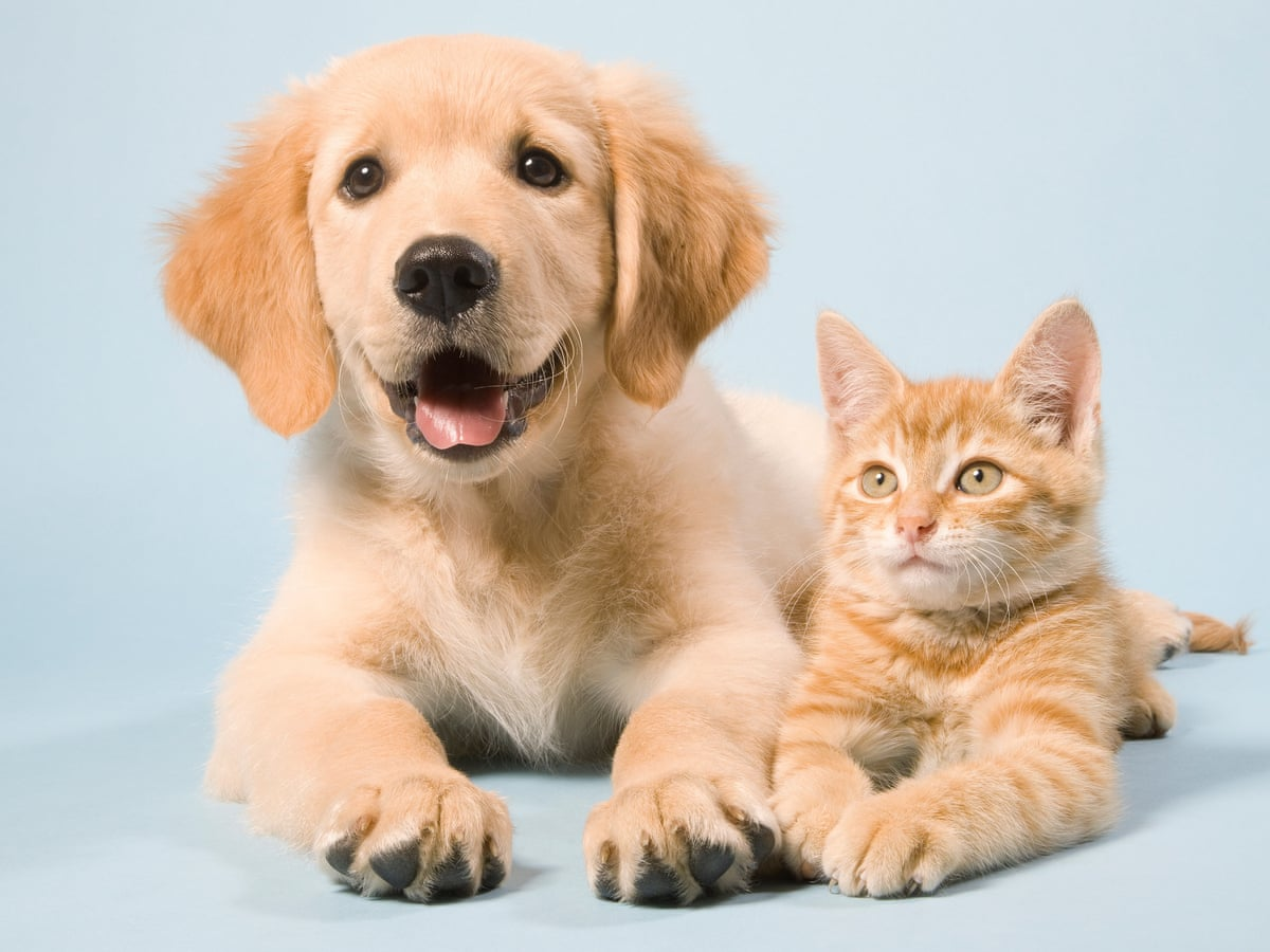 Pet Sitters-Caring Your Pets, But They Are They Cared? Pet Sitters Insurance, Caring the Carers