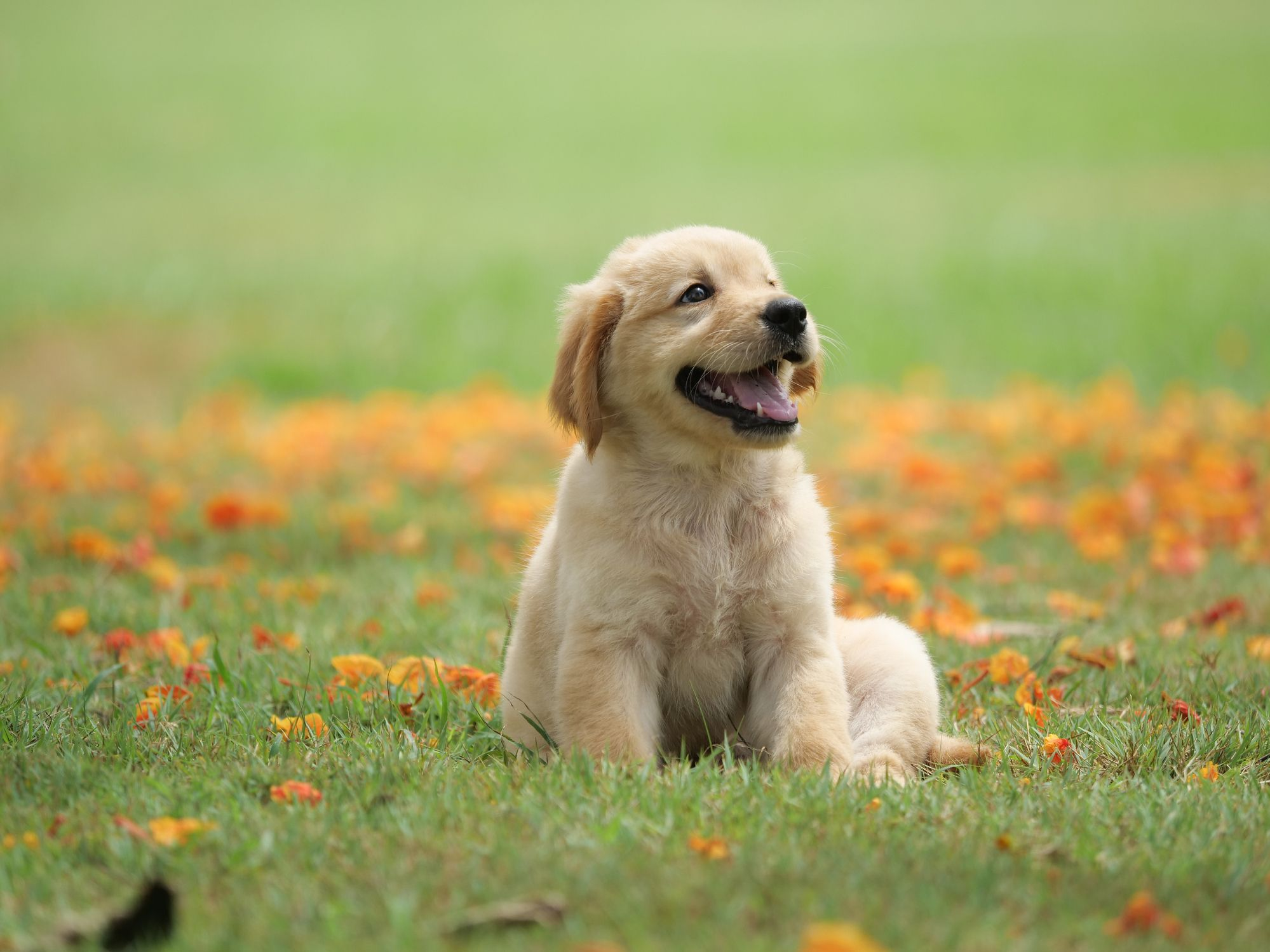 7 Questions you should ask When Selecting Pet Food for the Pooch