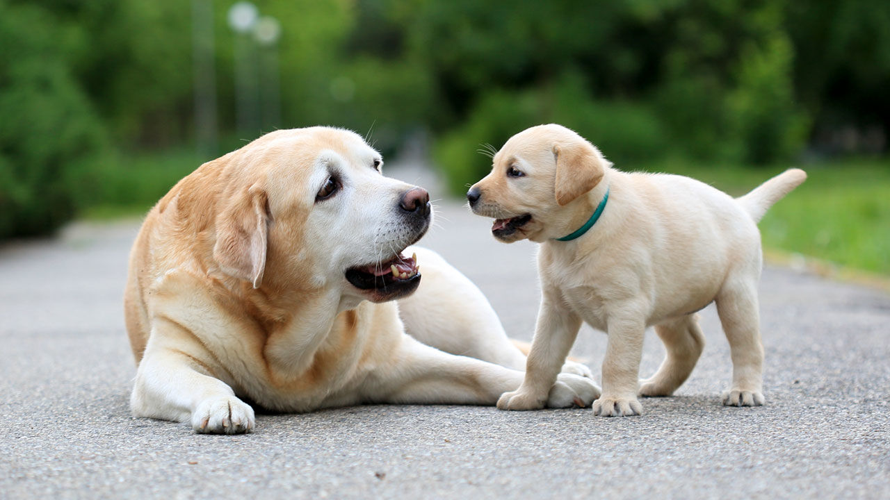 Dog Behavior Problems – Stop Dog Barking & Obtain a Decent Night's Sleep