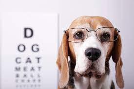 Pet Health Is Our Obligation