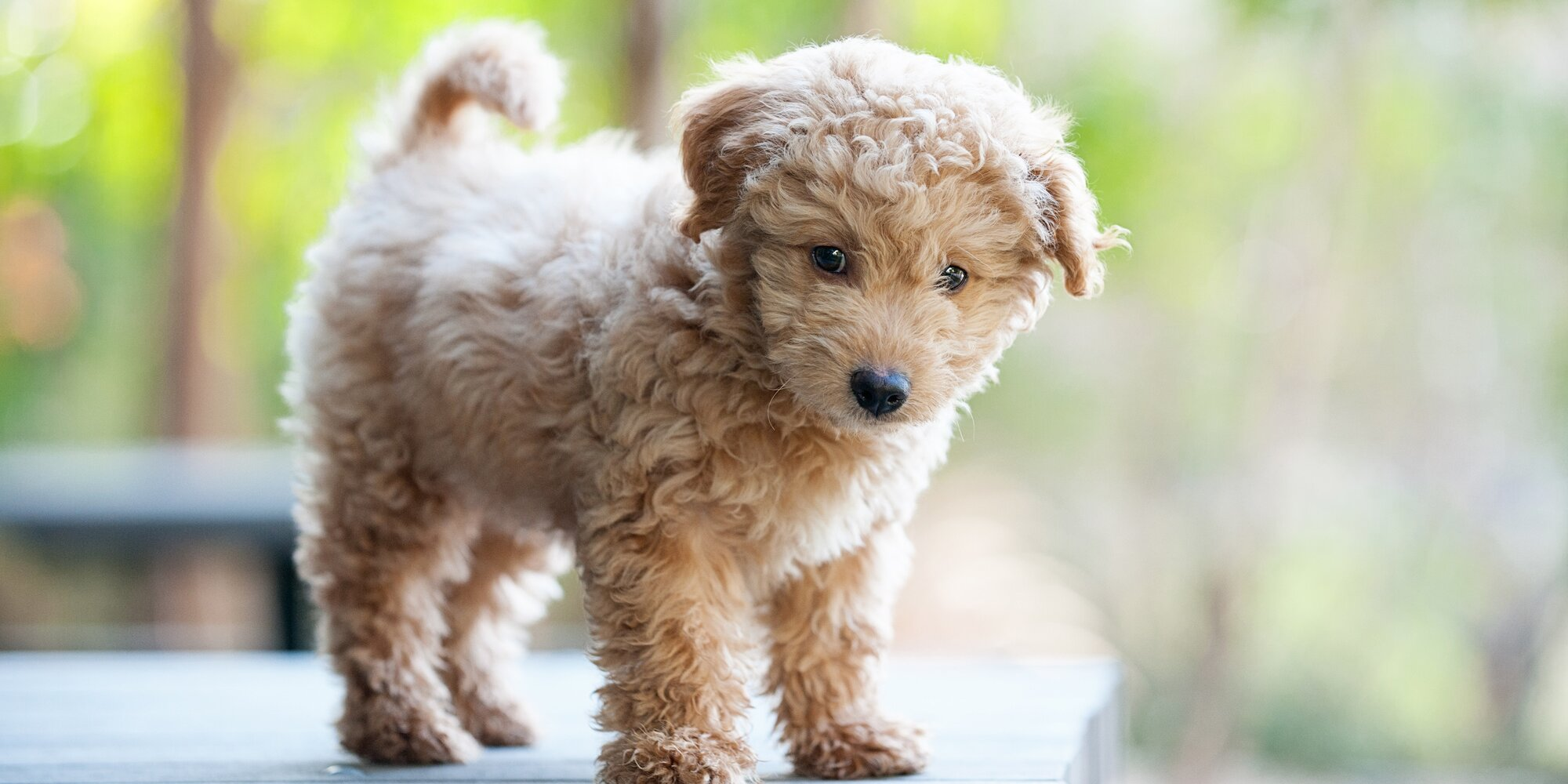 Top Questions For Dog Adoption & Handling For Families With Children