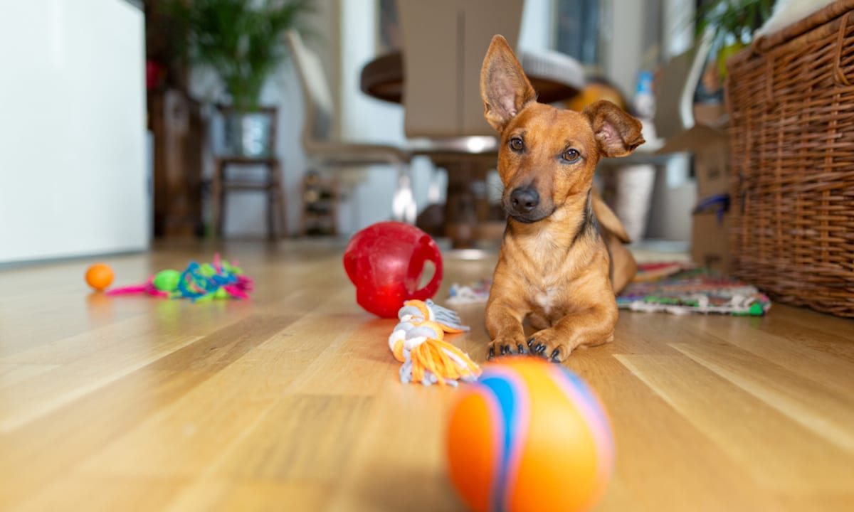 Great Pet Care Tips